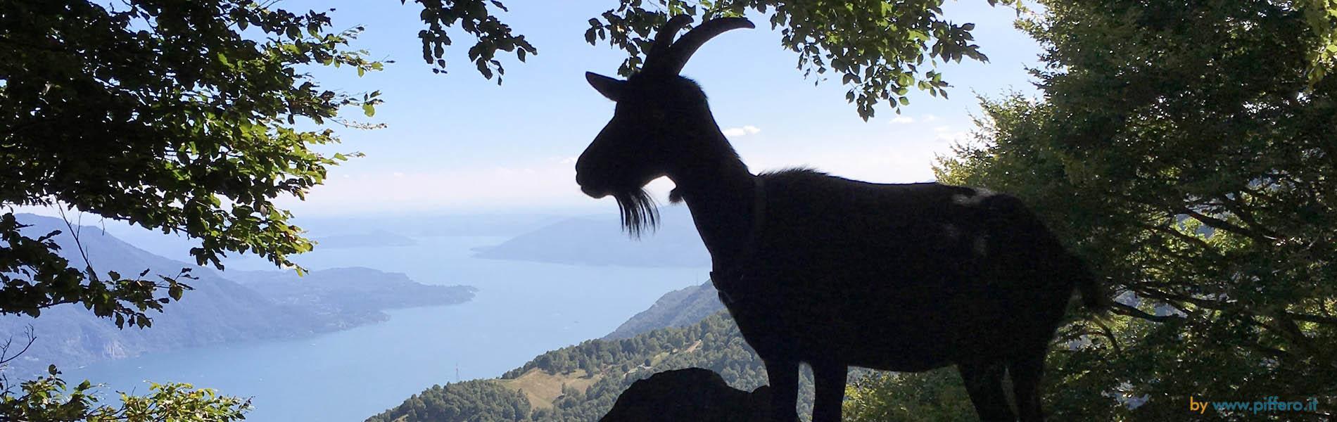 Panorama Lago Maggiore dal Monte Morissolo