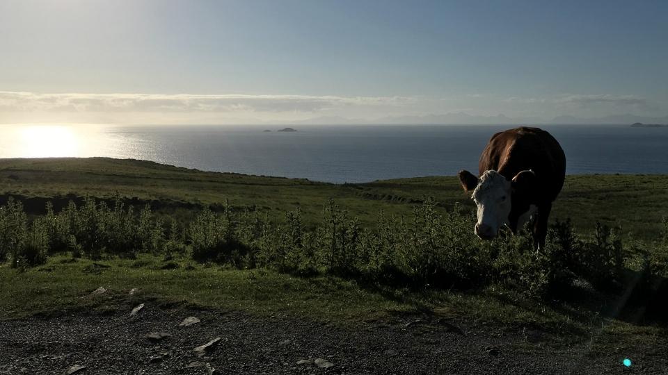 Fotogallery Alessandro Piffero Scozia - Skye
